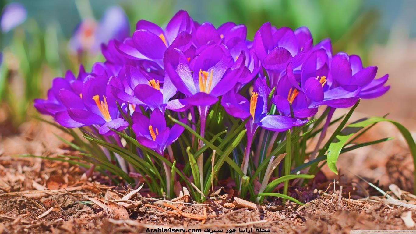 صور-فصل-الربيع-للتحميل-روعة-1