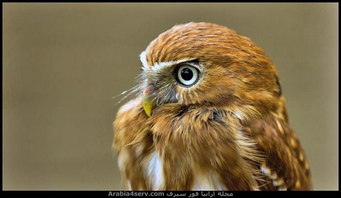 احلى-صور-طيور-جديدة-2015-5