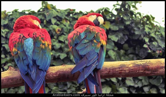 اروع-احدث-صور-طيور-4