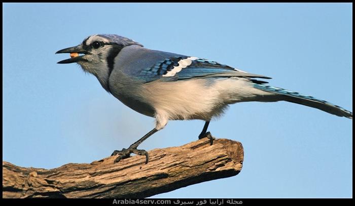 اروع-صور-للطيور-جميلة-جدا-4