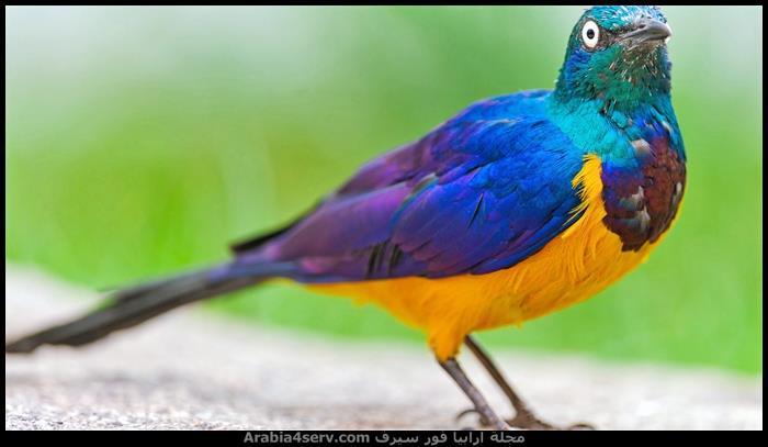 صور-اجمل-طيور-ملونة-1
