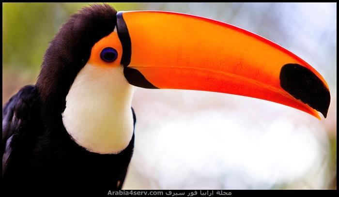 صور-الوان-الطيور-روعة-1
