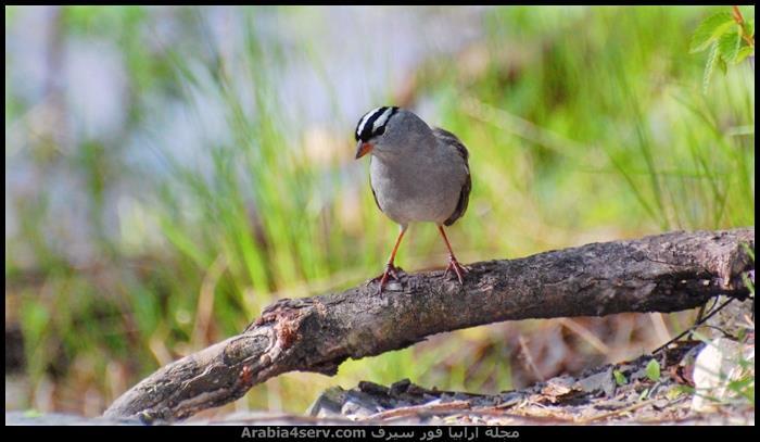 صور-جميلة-للطيور-روعة-1
