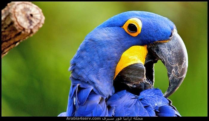صور-طائر-الببغاء-جميلة-رائعة-جديدة-2