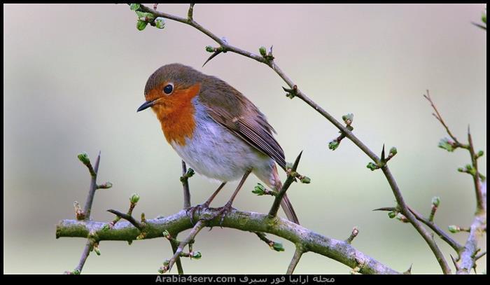 صور-طبيعية-للطيور-روعة-1