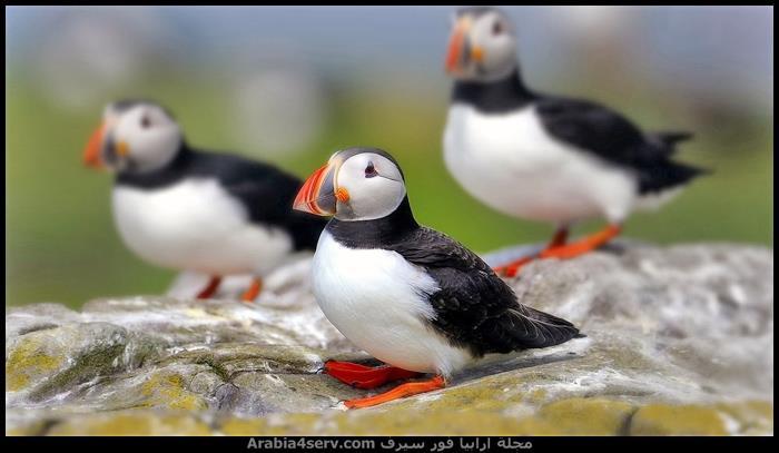 صور-طيور-احترافية-جميلة-1