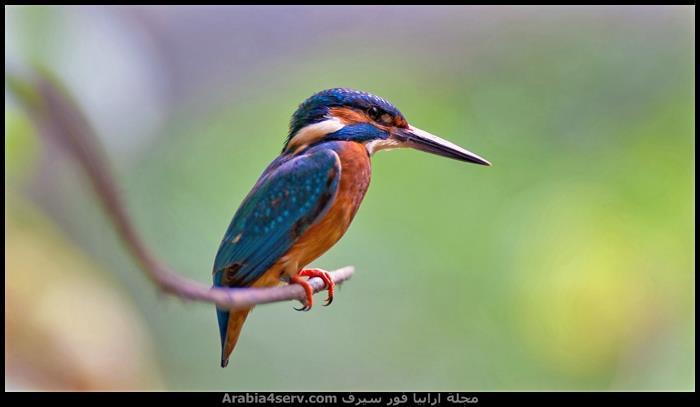 صور-طيور-دقة-عالية-HD-7