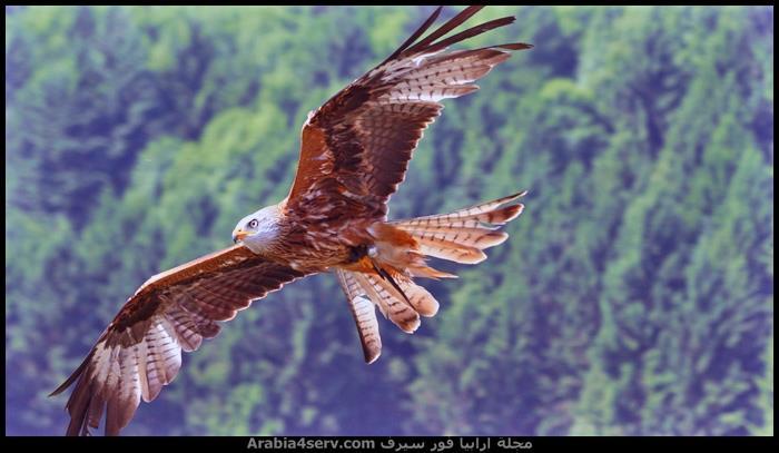 صور-طيور-مفترسة-جميلة-جدا-1