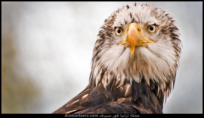 صور-طيور-مفترسة-جميلة-جدا-3