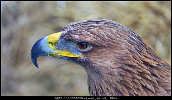 صور-طيور-مفترسة-جميلة-جدا-4