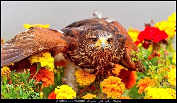 صور طيور مفترسة جميلة جدا