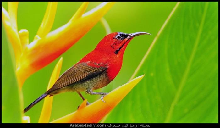 صور-طيور-ملونة-روعة-5