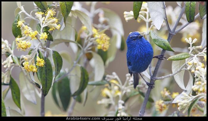 صور-عصافير-ملونة-جميلة-جدا-3