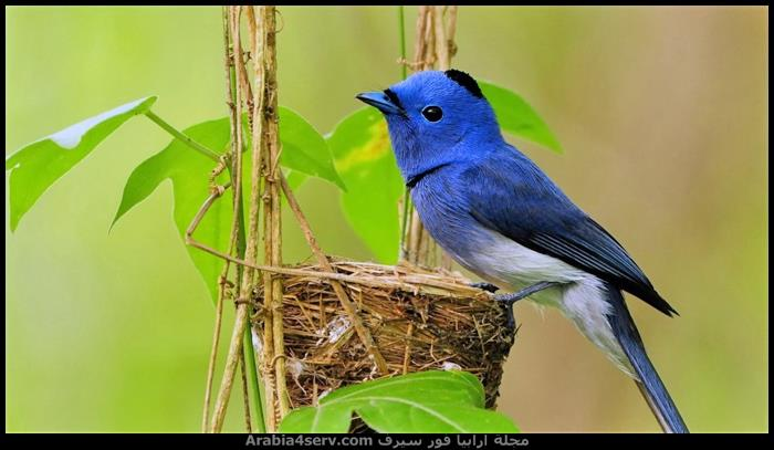 صور-عصافير-ملونة-جميلة-جدا-4