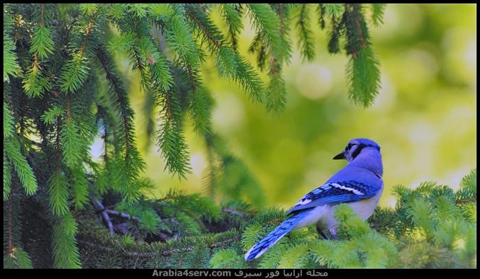 صور-عصافير-ملونة-جميلة-جدا-5