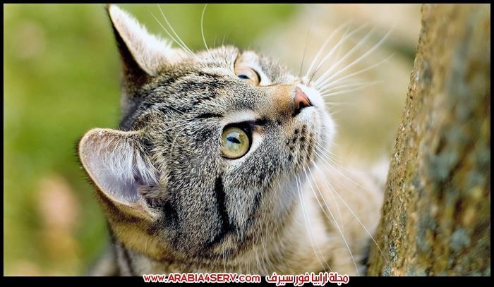 صور-وجوه-قطط-جميلة-جدا-1