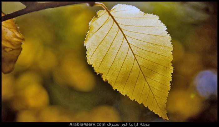 اجمل-صور-فصل-الخريف-1
