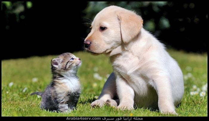 اجمل-صور-قطط-وكلاب-مع-بعض-سويا-1