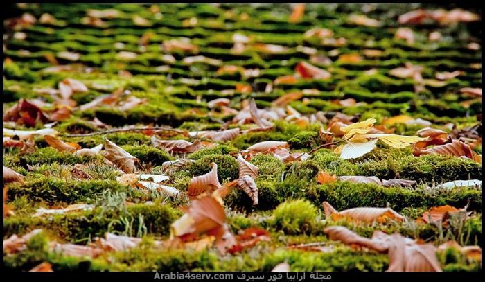 احلى-اجمل-اروع-صور-فصل-الخريف-1