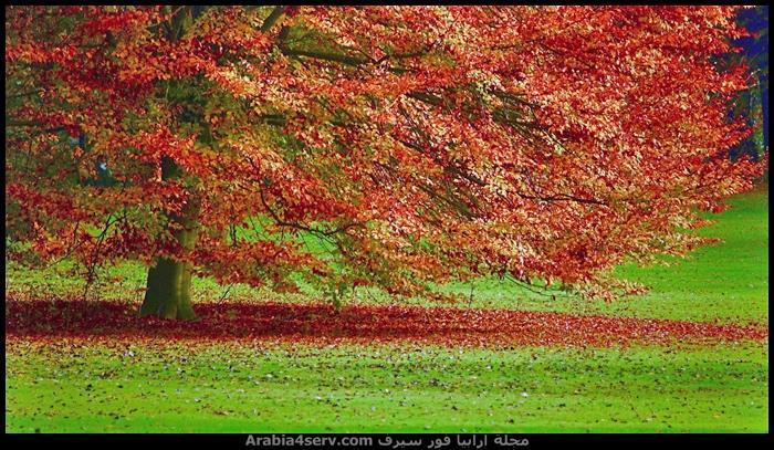 احلى-صور-الخريف-صور-جميلة-جدا-1