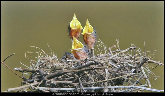 تحميل-صور-طيور-متنوعة-جميلة-4