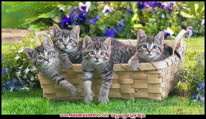 تحميل-صور-قطط-جميلة-جدا-رائعة-1