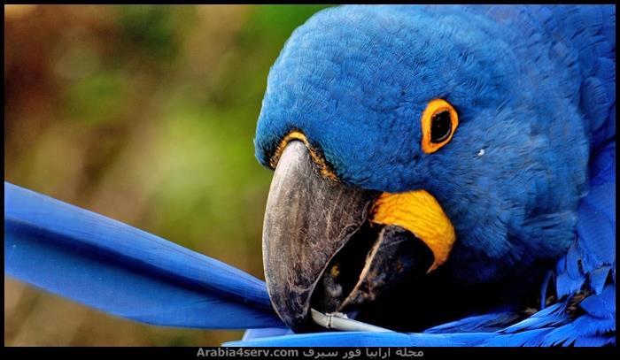 صور-طائر-الببغاء-جميلة-رائعة-جديدة-1