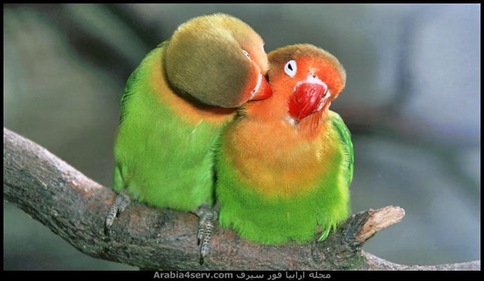 صور طائر الببغاء جميلة رائعة جديدة