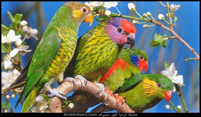 صور-طائر-الببغاء-جميلة-رائعة-جديدة-7