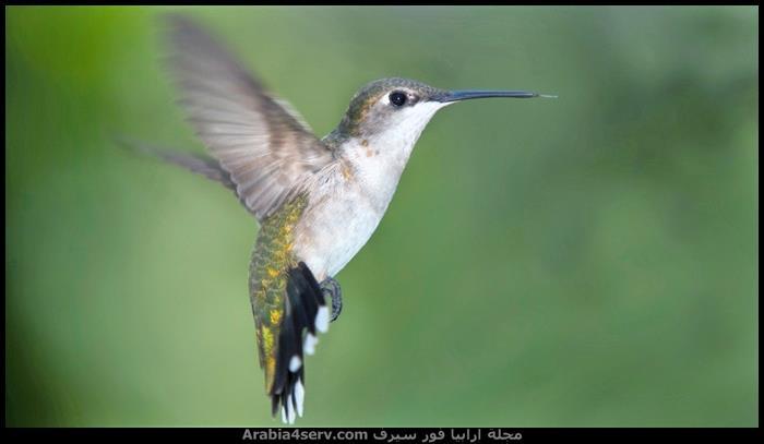 صور-طيور-HD-جودة-عالية-1