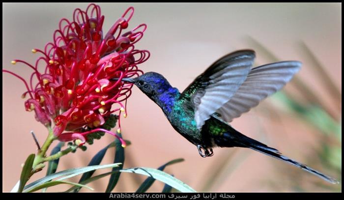 صور-عصافير-ملونة-جميلة-جدا-6