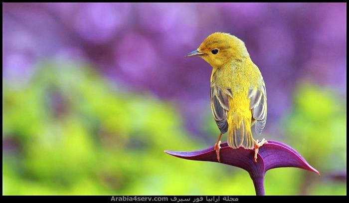 صور عصافير ملونة جميلة جدا