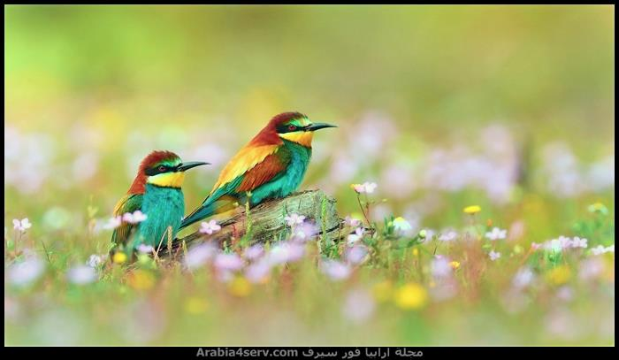صور-عصافير-ملونة-جميلة-جدا-8