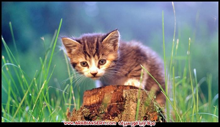 صور-قطط-كيوت-اوي-عسل-جدا-1