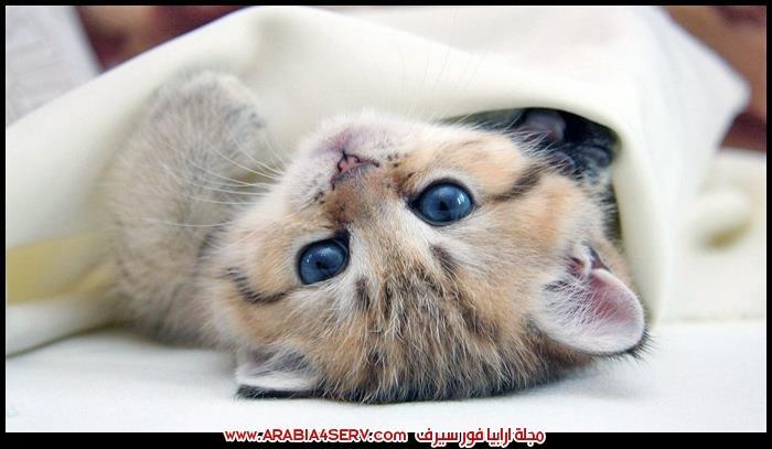 صور-قطط-نائمة-تلعب-عسل-كيوت-1