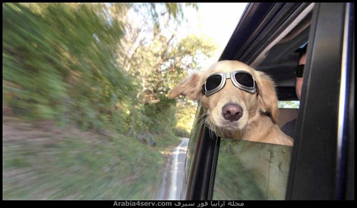 صور-كلاب-متنوعة-جديدة-2015-1