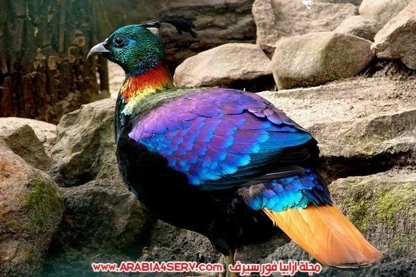 اجمل-صور-طيور-ملونة-رائعة-جدا-1