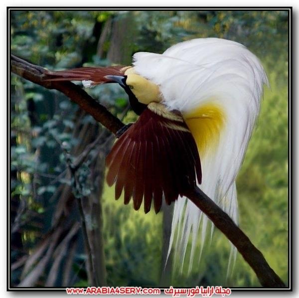 اجمل صور طيور ملونة رائعة جدا