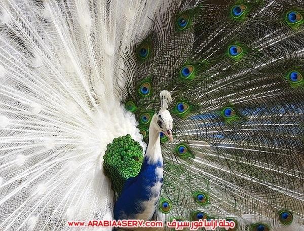 اجمل-صور-طيور-ملونة-رائعة-جدا-12