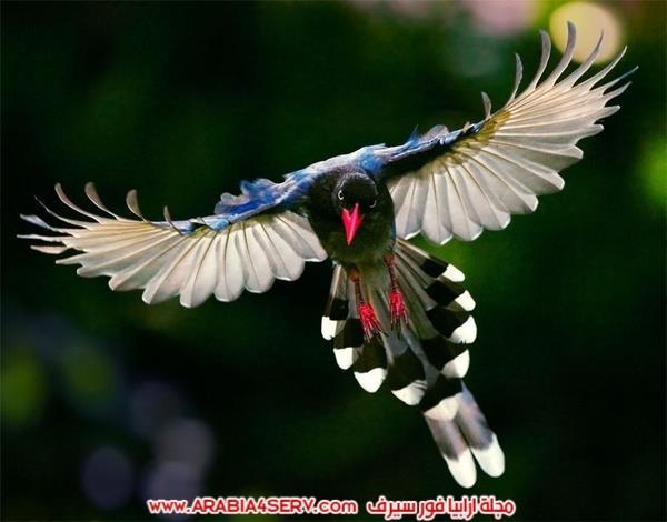 اجمل-صور-طيور-ملونة-رائعة-جدا-2