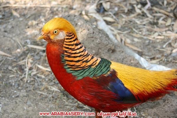 اجمل-صور-طيور-ملونة-رائعة-جدا-4