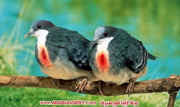 اجمل-صور-طيور-ملونة-رائعة-جدا-7