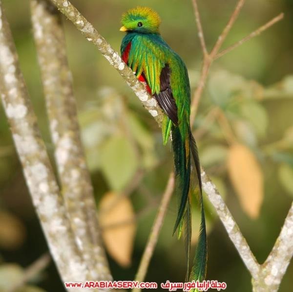 اجمل-صور-طيور-ملونة-رائعة-جدا-9