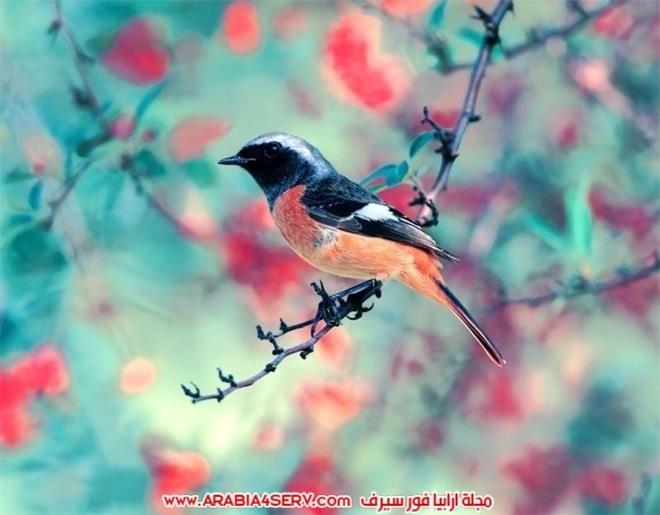 اجمل-و-احلى-صور-طيور-و-عصافير-ملونة-10