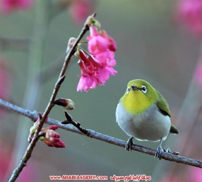 اجمل-و-احلى-صور-طيور-و-عصافير-ملونة-2