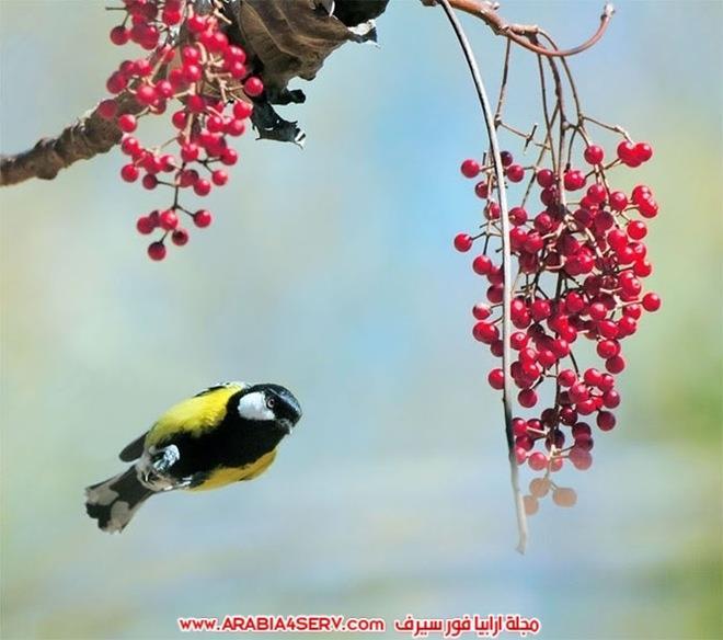 اجمل-و-احلى-صور-طيور-و-عصافير-ملونة-5