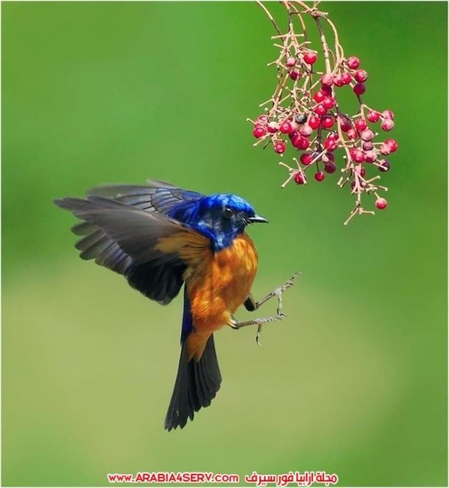اجمل-و-احلى-صور-طيور-و-عصافير-ملونة-6