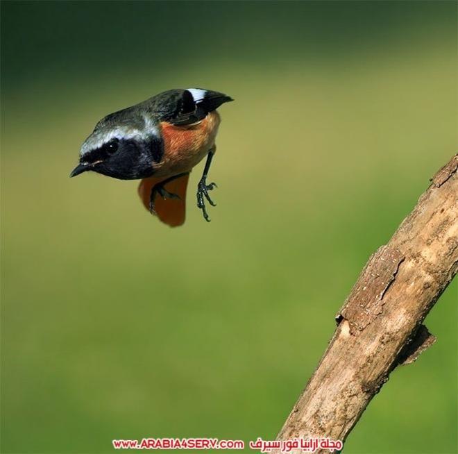 اجمل-و-احلى-صور-طيور-و-عصافير-ملونة-8