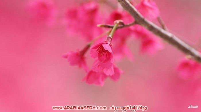 اجمل-و-احلى-صور-عصافير-و-زهور-12