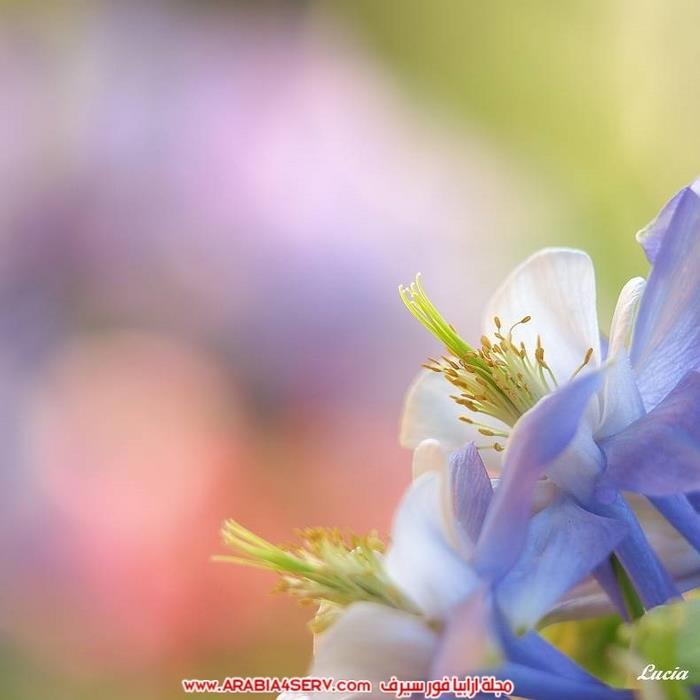 اجمل-و-احلى-صور-عصافير-و-زهور-4